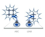 Detect Low-abundance Proteins with Biotinylated Antibodies