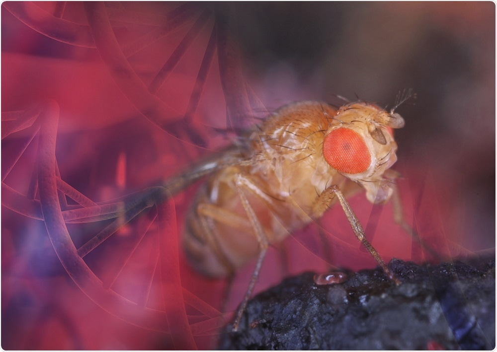 High Performance Drosophila ChIP Kits