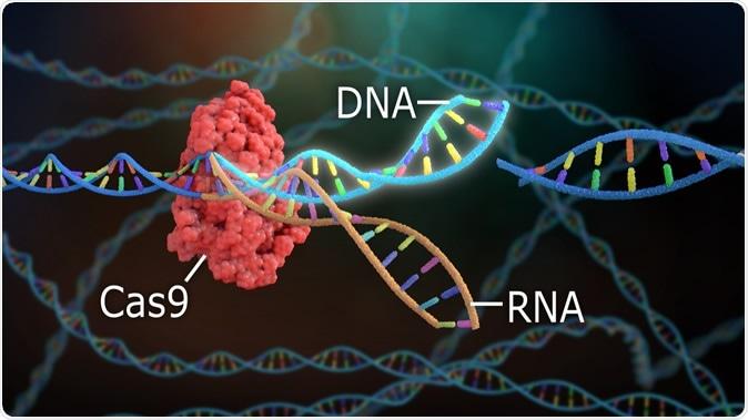 Rendering 3D di DNA Crispr.  Immagine di credito: Nathan Devery / Shutterstock