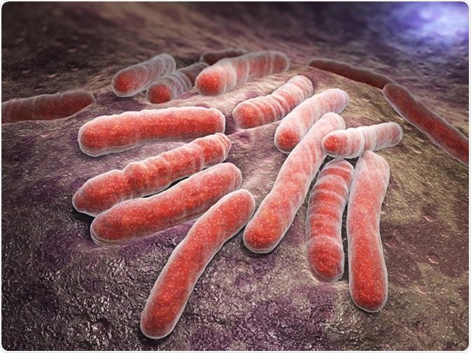 Il Mycobacterium tuberculosis è una specie batterica patogena nella famiglia delle Mycobacteriaceae e l'agente eziologico della maggior parte dei casi di tubercolosi - Illustrazione Crediti: Tatiana Shepeleva / Shutterstock