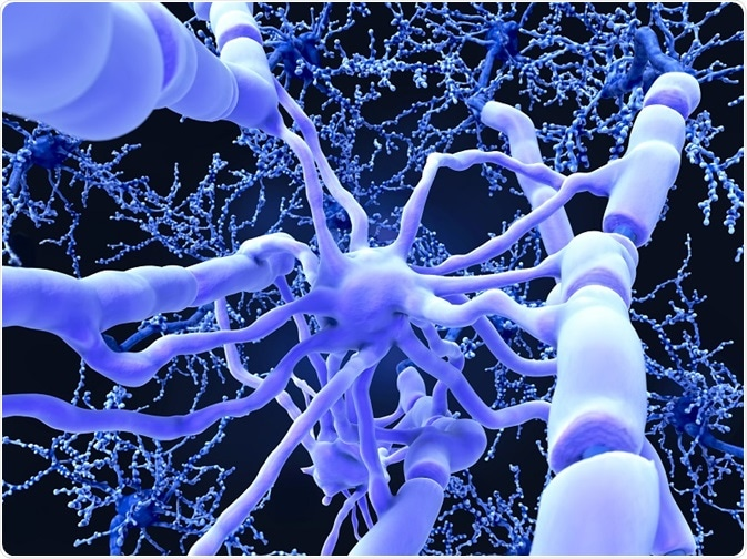 Oligodendrocytes form insulating myelin sheaths around neuron axons in the central nervous system.