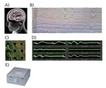 Evaluating Convulsive Activity in hiPSC-Derived Neurons and Astrocytes using a Micro-Electrode Array