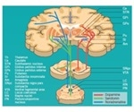 Neurobiology and Therapeutic Targets of Parkinson's Disease