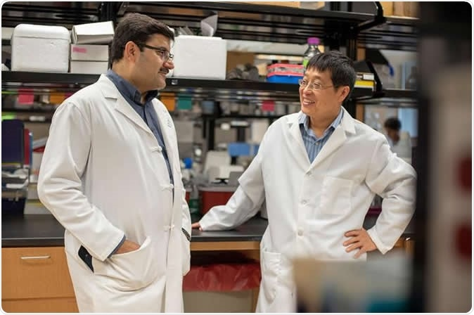 Long-time Medical University of South Carolina collaborators Dr. Shikhar Mehrotra (left) and Dr. Xue-Zhong Yu (right) author papers showing that a natural antioxidant can modulate T cell activity in cancer immunotherapy and graft-vs.-host disease, respectively. Image Credit: Emma Vought, Medical University of South Carolina