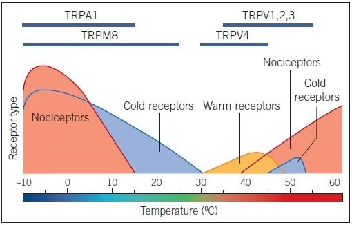 TRP channels as temperature sensors. Thermal activation profile of temperature-sensitive TRP channels. Receptor type activated by particular temperatures is highlighted in the lower part of the figure, aligned to a temperature scale bar.
