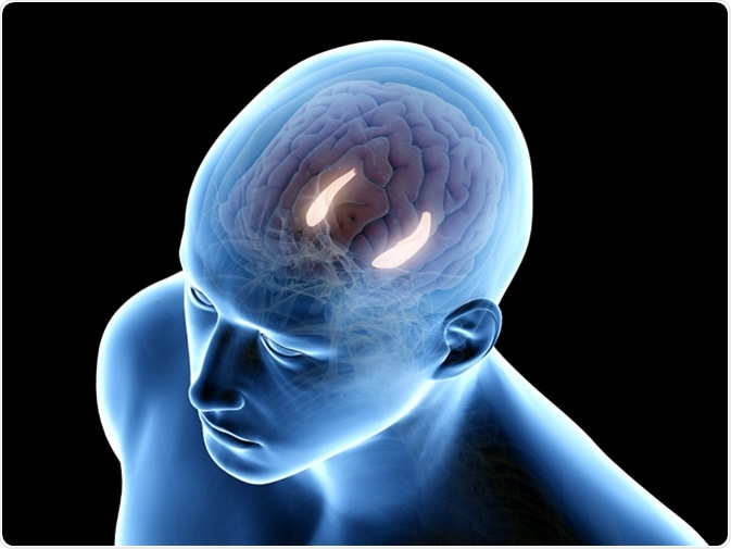 3d rendered medically accurate illustration of the hippocampus. Image Credit: Sebastian Kaulitzki / Shutterstock
