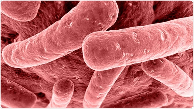 Botulism is a potentially fatal condition that is caused by a bacterium called Clostridium botulinum.