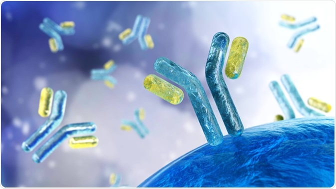 Antibodies, 3D rendering - Illustration Credit: ustas7777777 / Shutterstock