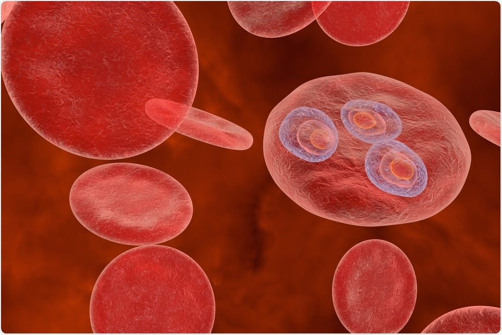 Trophozoites inside red blood cells (stage in the malaria life cycle)