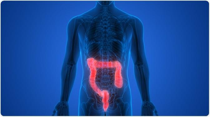 sulfuro de hidrógeno que produce bacterias intestinales y diabetes