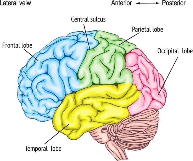 Cambios en la personalidad del tumor del lóbulo frontal derecho