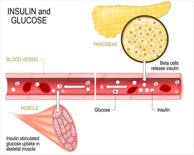 función+biológica+de+los+minerales+en+el+metabolismo+celular