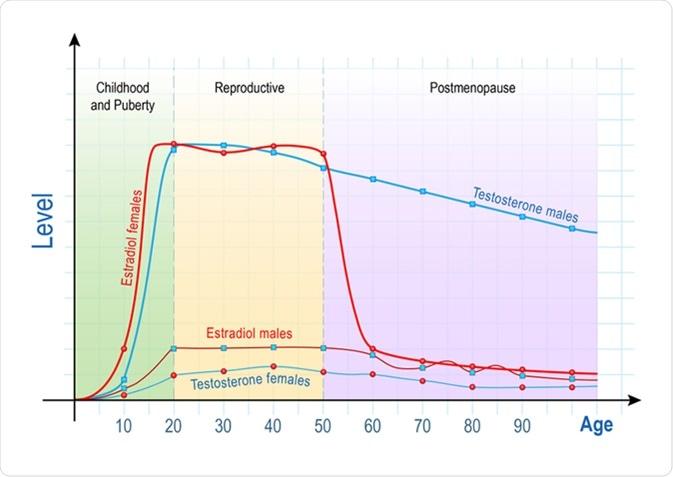 progesterone ed erezione pene costantemente eretto
