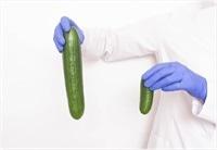 structura normala a penisului