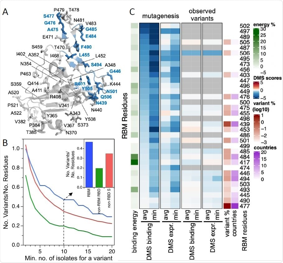 The RBM exhibits significant natural diversity in circulating SARS-CoV-2 isolates
