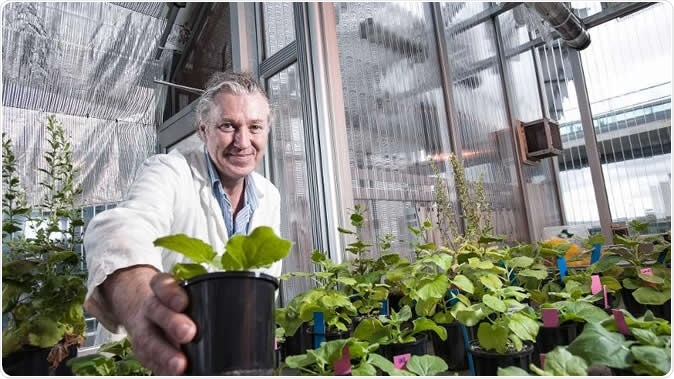 Australian scientist, Prof. Peter Waterhouse with Nicotiana benthamiana