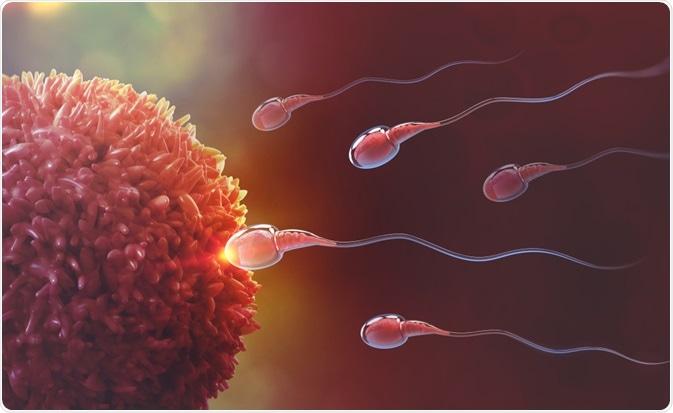 Edad y fertilidad masculinas