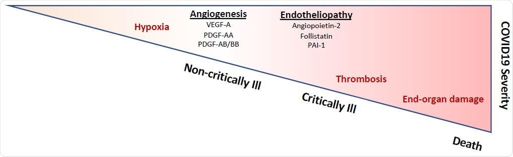 Indeed, multiple biomarkers of endotheliopathy segregate with increased mortality. While a number of biomarkers, including D-dimer, troponin, and B-type natriuretic peptide, have been associated with survival in COVID-19, there is currently a paucity of vascular-specific biomarkers that can help prognosticate patients with COVID-19. This is a critical unmet need, given the emerging evidence for endothelial cell involvement in COVID-19 pathogenesis. Development of circulating markers that can detect specific aspects of COVID- 19 pathogenesis may be critical to guide the use of novel therapeutic strategies, including those that may safeguard the vasculature, such as dipyridamole or inhibitors of the complement cascade. Further validation of our findings in larger patient cohorts, together with mechanistic studies to understand the causes of endothelial injury and its consequences for immune activation, vascular dysfunction, and thrombosis, promise to provide pivotal insights into COVID-19 pathogenesis and guide clinical management.