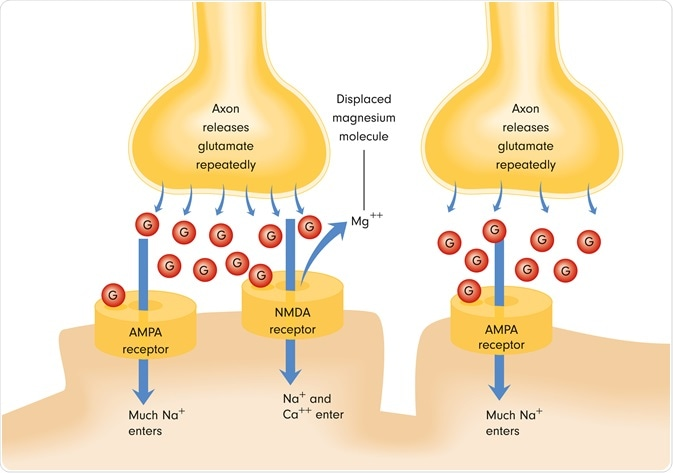 What Are Nmda Receptors