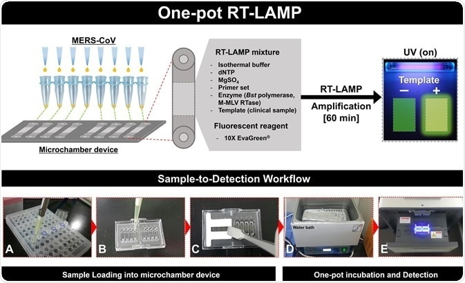 RT-LAMP technology