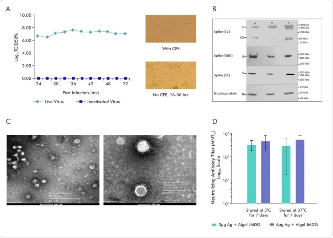 Characterization of inactivated SARS-CoV-2 and evaluation of the stability of BBV152 vaccine formulations.