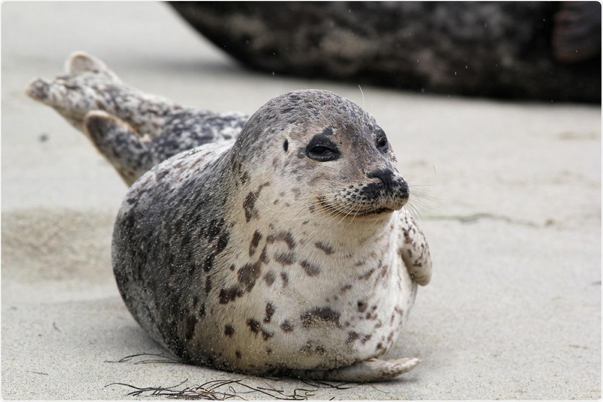 Happy Harbor Seal. Image Credit: Randy Bjorklund / Shutterstock