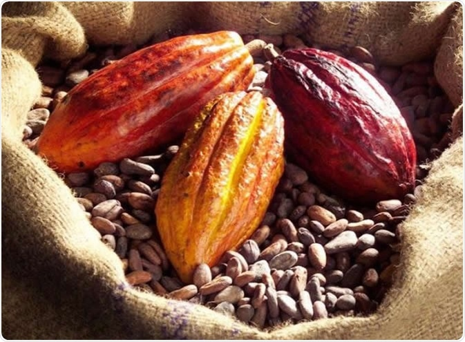 Cognitive function is improved with a diet high in cocoa flavanols -- a group of naturally occurring bioactives found in fresh cocoa beans. image Credit: Mars, Incorporated