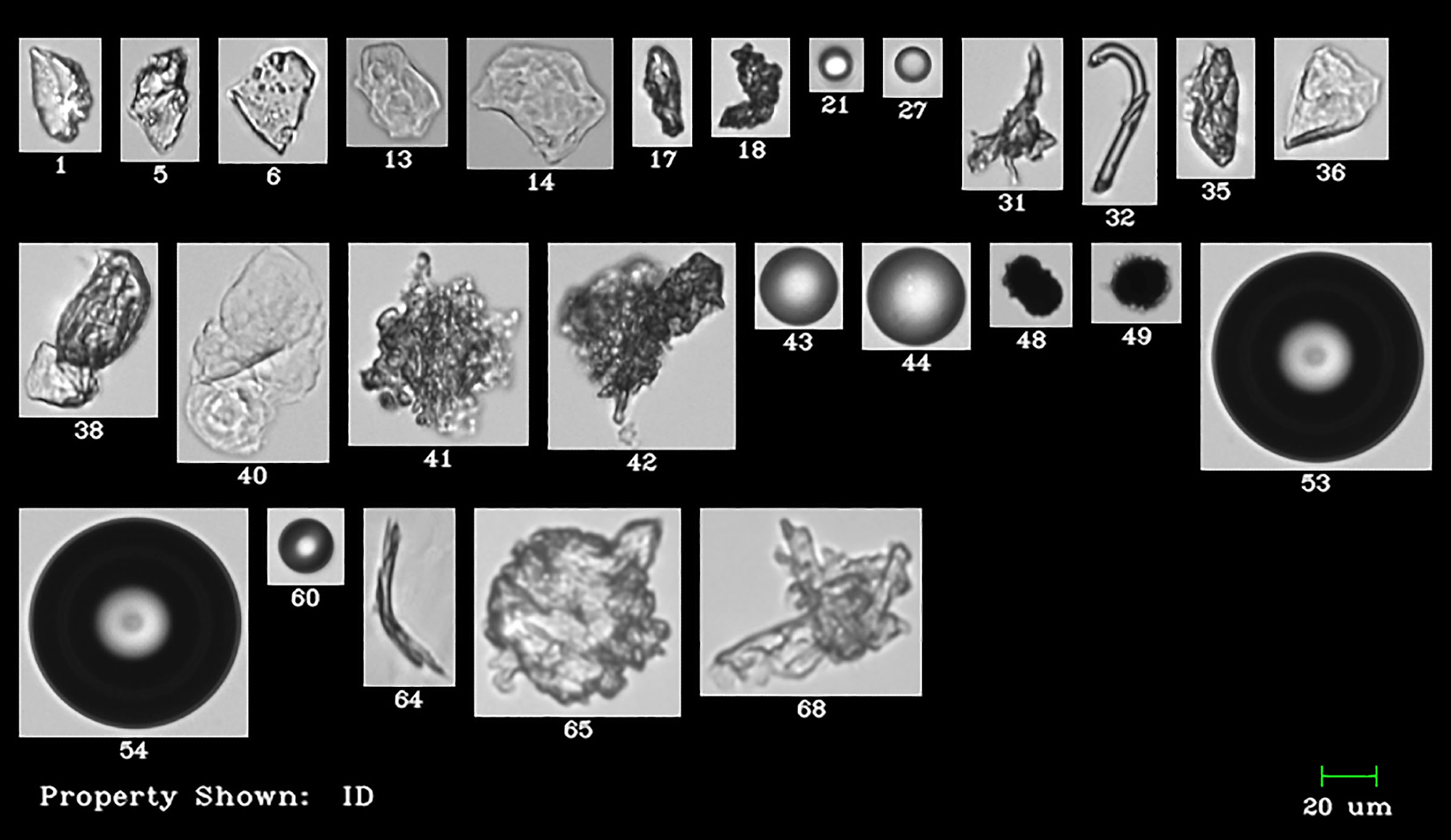 Intrinsic and extrinsic particles imaged by the FlowCam: protein aggregates, glass shards, silicone oil droplets, and other particulate.