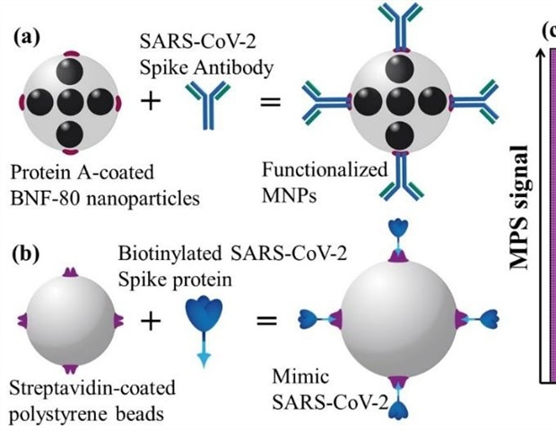 Rapid and sensitive detection of SARS-CoV-2 with functionalized magnetic nanoparticles