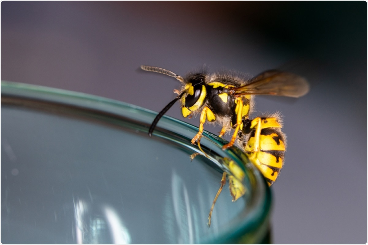 Study: Repurposing a peptide toxin from wasp venom into antiinfectives with dual antimicrobial and immunomodulatory properties. Image Credit: Jimmy R / Shutterstock