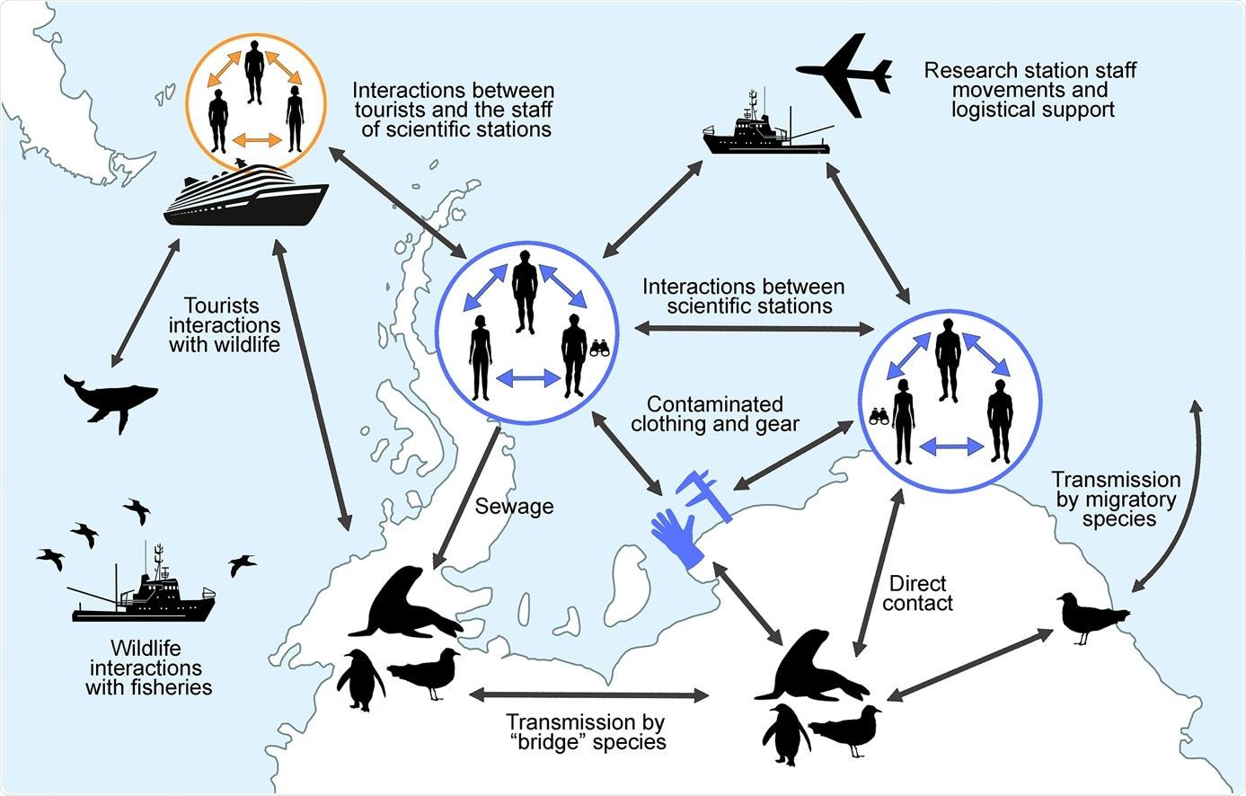 Estudio: Evaluación de riesgos del SARS-CoV-2 en la fauna antártica.