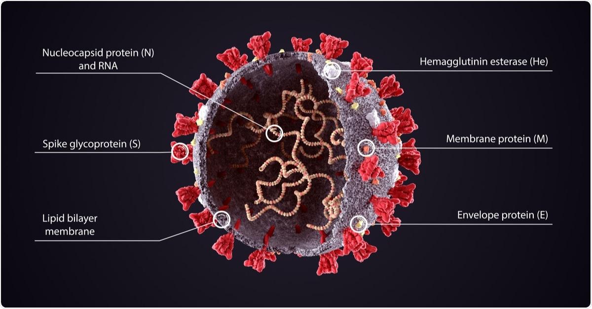 Ilustración 3D del diagrama de estructura del virus COVID-19.  Corona Virus SARS-CoV-2, 2019 sheme del virus nCoV.  Descripción de texto completo con modelo en rodajas y ARN sobre fondo oscuro.  Haber de imagen: Orpheus FX / Shutterstock