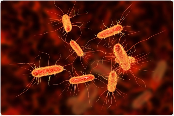 Escherichia coli bacterium, E.coli, gram-negative rod-shaped bacteria, part of intestinal normal flora and causative agent of diarrhea and inflammation, 3D illustration: Kateryna Kon / Shutterstock
