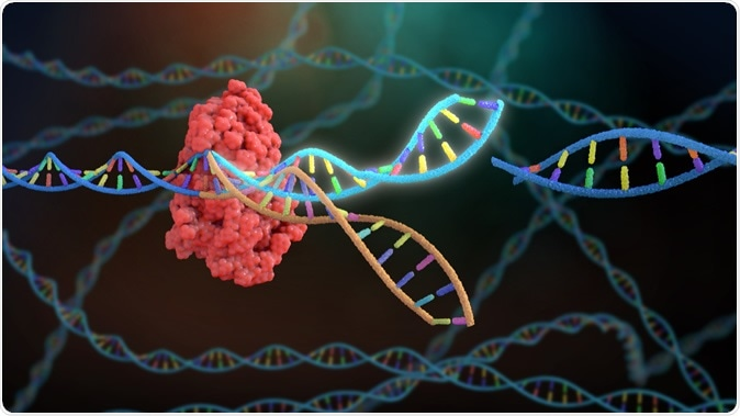 3D Rendering Crispr DNA Editing. Image Credit: Nathan Devery / Shutterstock