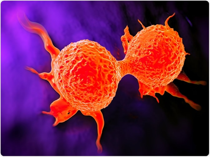 Dividing breast cancer cell. Image Credit: Shutterstock