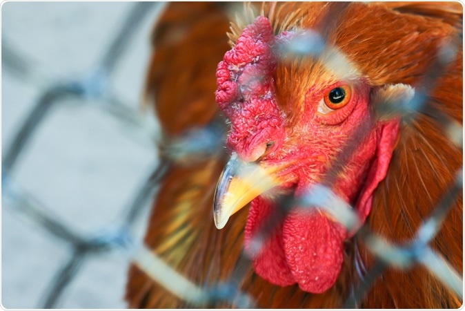 The new bird flu outbreak was reported on Feb. 1 in the Shuangqing district of Shaiyang City. Image Credit: Campre / Shutterstock