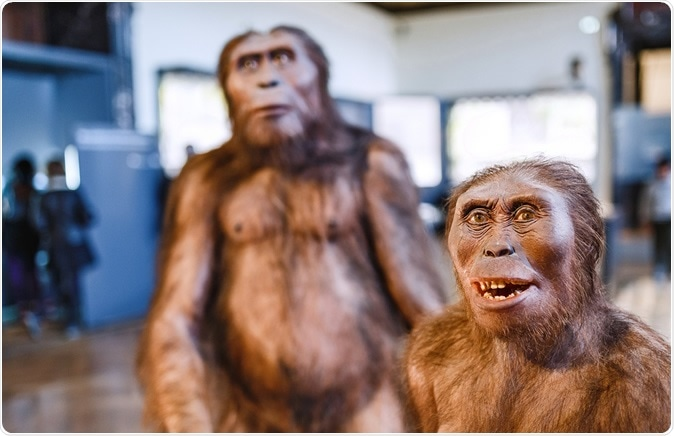 VIENNA, MUSEUM OF NATURAL HISTORY, AUSTRIA: Installation demonstrating the prehistoric ancestors of man homo erectus. Image Credit: Shutterstock