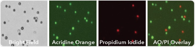 Human PBMC sample stained with Acridine Orange/Propidium iodide (AO/PI) and imaged using bright field and fluorescence on Cellaca MX.