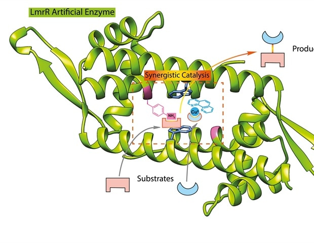 First artificial enzyme with non-biological catalytic sites created