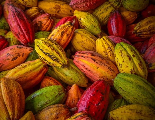 Drinking cocoa could relieve peripheral arterial disease