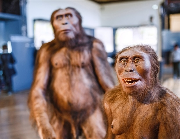 Ancient primate microbiomes may yield more information about human development - News-Medical.net