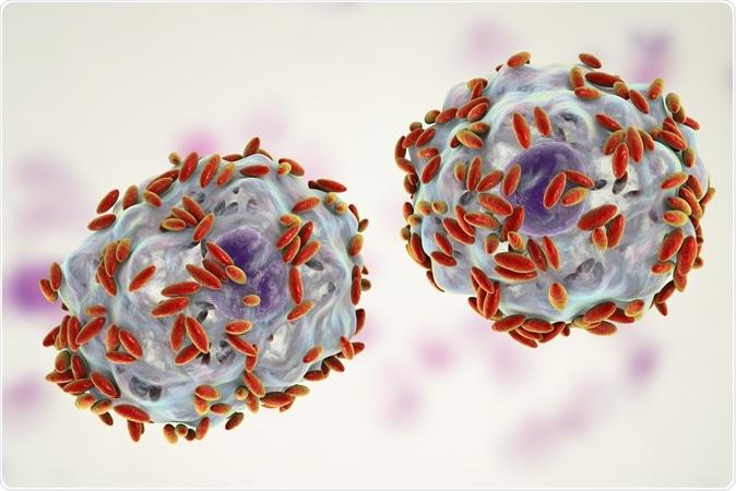 Diagnostic microscopique de la vaginose bactérienne. Les sécrétions vaginales contiennent des cellules épithéliales, appelées cellules d'indice recouvertes de bactéries Gardnerella vaginalis, illustration 3D. Crédit d'image: Kateryna Kon
