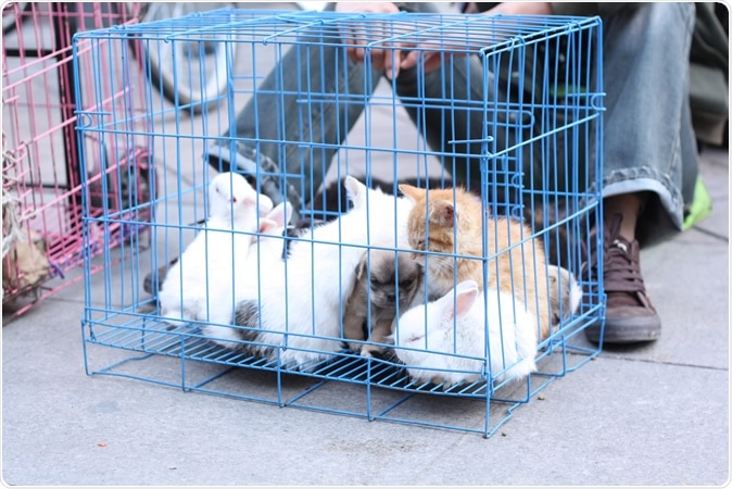 Small animals, rabbit, kitten, puppy, sharing a cage. Image Credit: Epov Dmitry / Shutterstock