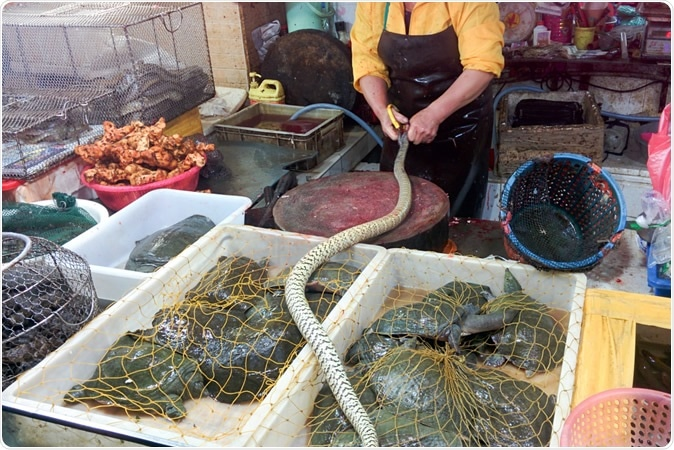 GUANGZHOU, CHINA - Chinese snake and reptiles market. Image Credit: tostphoto / Shutterstock