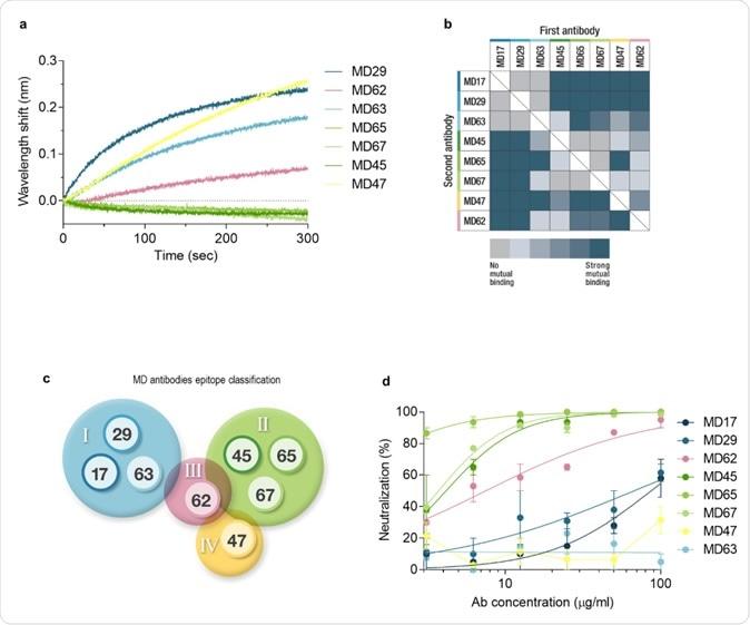 Binage d'épitopes et neutralisation du SRAS-CoV-2. une. L'interférométrie en biocouche a été appliquée pour les expériences de binage d'épitopes. Des résultats d'essai représentatifs sont montrés pour le mAb MD65. L'anticorps purifié a été biotinylé, immobilisé sur un capteur de streptavidine et saturé de RBD. Le complexe a ensuite été incubé pendant 300 secondes avec chacun des anticorps indiqués. Le temps 0 représente la liaison au complexe MD65-RBD. b. Binage épitopique complet des huit anticorps monoclonaux MD sélectionnés. La liaison a été évaluée par la capacité de chaque paire d'anticorps à se lier simultanément à RBD, en utilisant l'interférométrie à biocouche. c. Quatre épitopes de liaison RBD non concurrents ont été identifiés et classés en conséquence en quatre groupes: I (bleu), II (vert), III (rose) et IV (jaune). ré. Neutralisation in vitro du SRAS-CoV-2 à l'aide du test de neutralisation par réduction de plaque (PRNT). La puissance de neutralisation a été déterminée par la capacité de chaque anticorps (aux concentrations indiquées) à réduire la formation de plaque; les résultats sont exprimés en pourcentage d'inhibition du contrôle sans Ab.