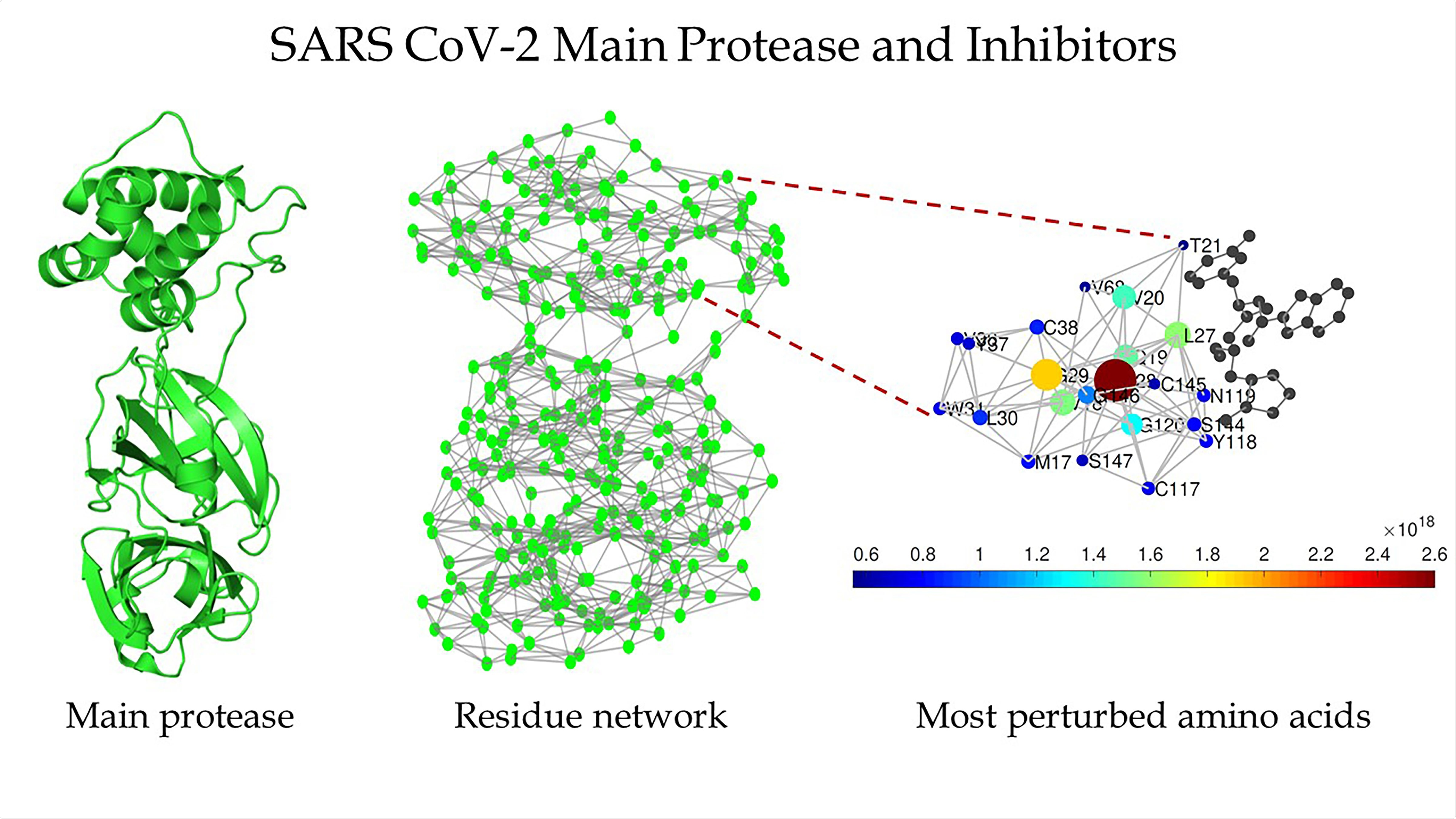 Schematic of the main protease of SARS-CoV-2 (left), the protein residue network of the main protease of SARS-CoV-2 (center), and a zoomed-in view of the region around the binding site as detected by Estrada (right).  CREDIT Ernesto Estrada