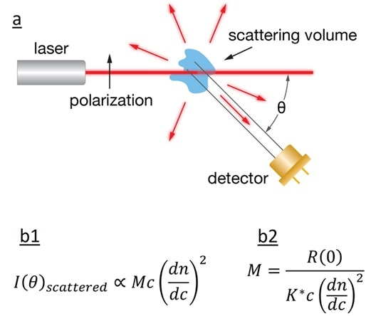 a) Schematic diagram of light scattering; b1) The intensity of the scattered light is related to the product of molar mass, concentration, and square of the refractive index increment; b2) calculation of the sample's MW.