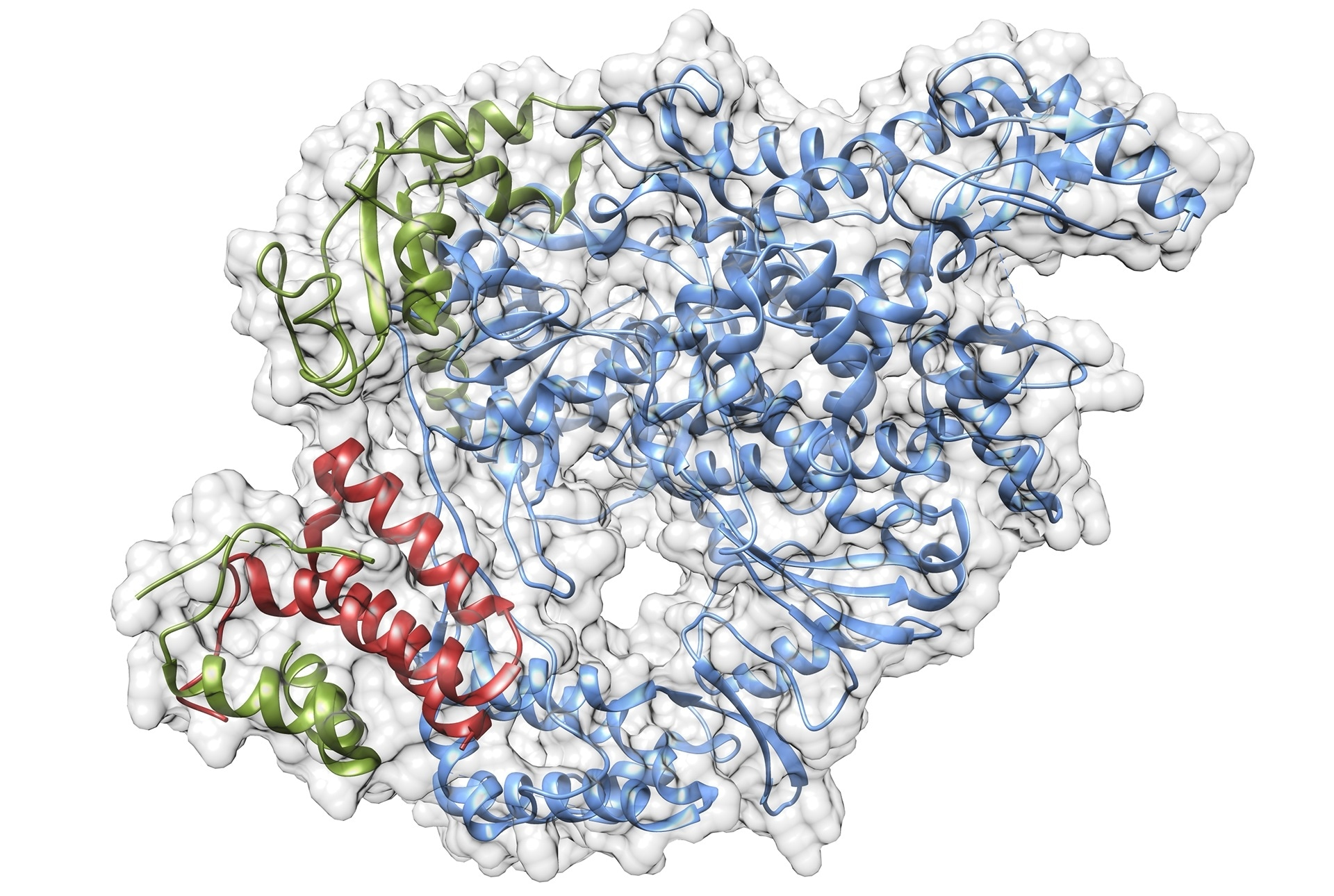 Scientists aim to understand the biology of SARS-CoV-2 virus to enable drug development