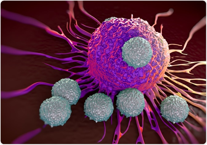 T Cells Attacking