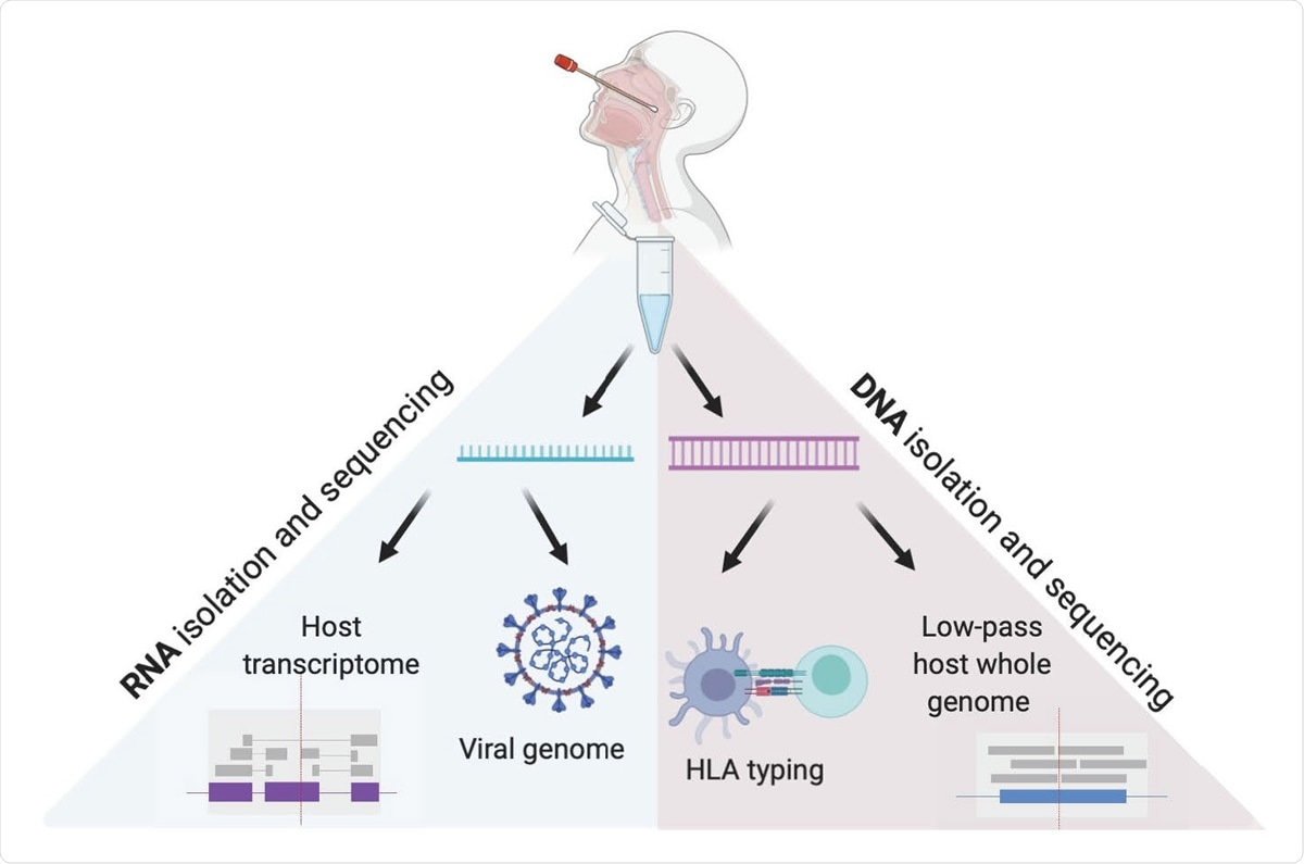 Viral and Host genomes and transcriptomes from a single nasopharyngeal swab. This method allows for independent RNA and DNA isolation from nasopharyngeal swab VTM, enabling viral genome sequencing, detection of host transcriptome, low pass host genome sequencing and HLA sequencing in high throughput.